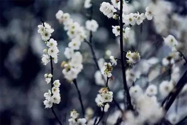 又是一年赏梅季,这里将成为全广州最美的地方!
