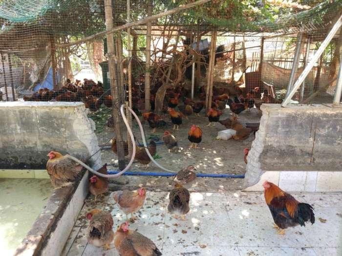 冬瓜+鸡,好吃到飞起!