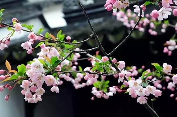今日春分最是一年好时节 这些养生习俗知多少?