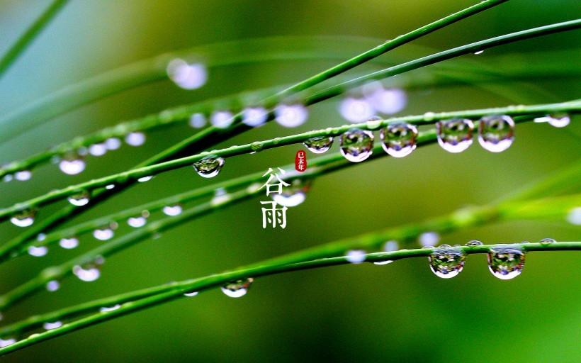 关于谷雨,这些你要知道
