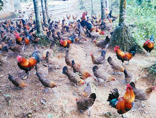 """广州那些可以""""叫鸡""""的地方,你去过几间?"""