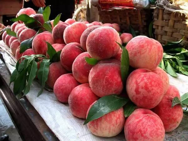周末走起,广州当季周边摘水果攻略