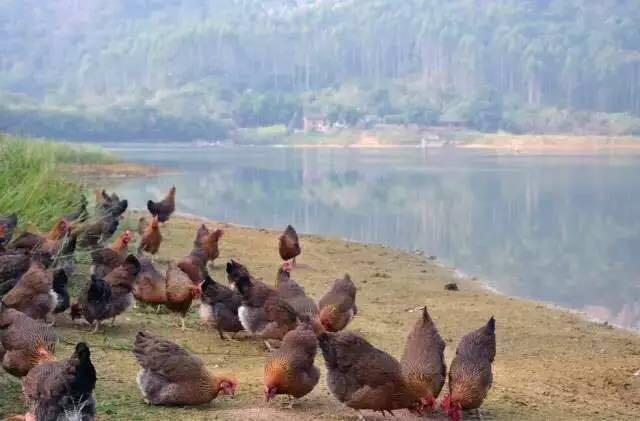 """广州这几家""""出神入化""""的""""做鸡""""店!你吃过么?"""