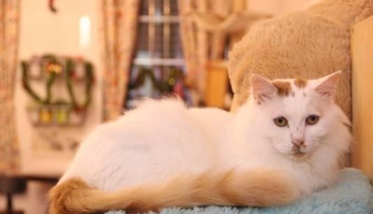 广州这几家猫主题餐厅,猫奴们都去吃过么?