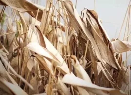 今日霜降,这些习俗和饮食你知道吗?