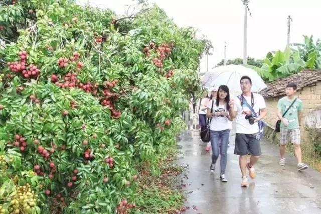 走起!这份广州摘荔枝的地图,你要收好了!